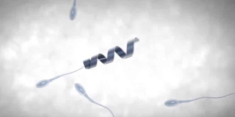 exosquelette spermatozoïde