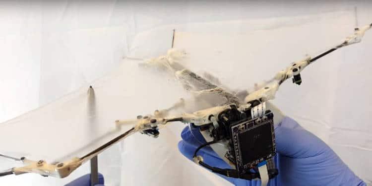 batrobot, le robot chauve souris