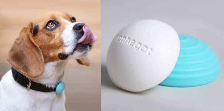 objet connecté pour animaux de compagnie
