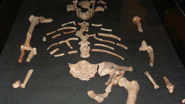 le décès de Lucy expliqué grâce à l'impression 3D