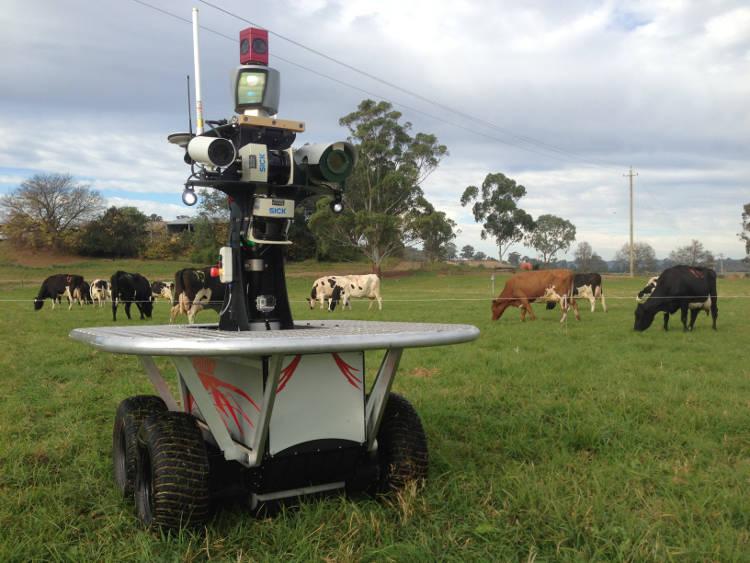 En Australie: un robot berger surveille les pâturages