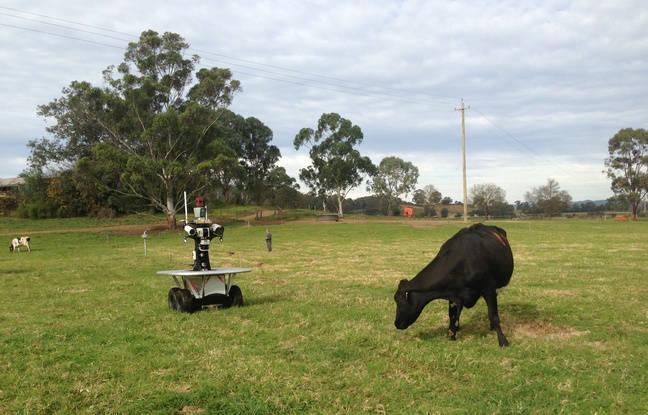 un robot gardien pour les animaux