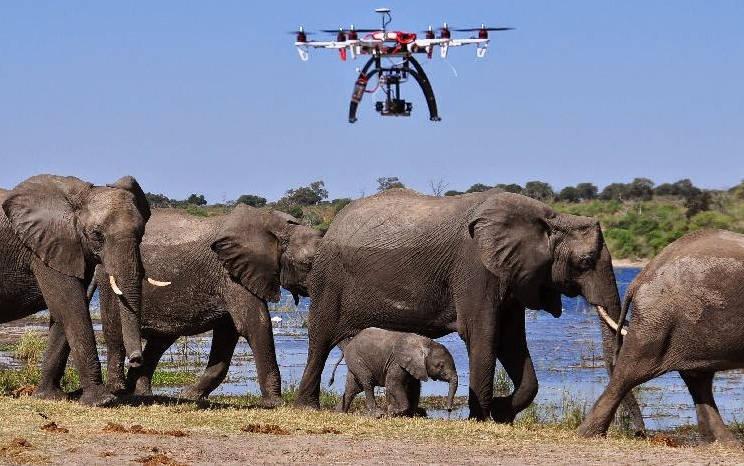 Les drones pour protéger la faune en voie de disparition