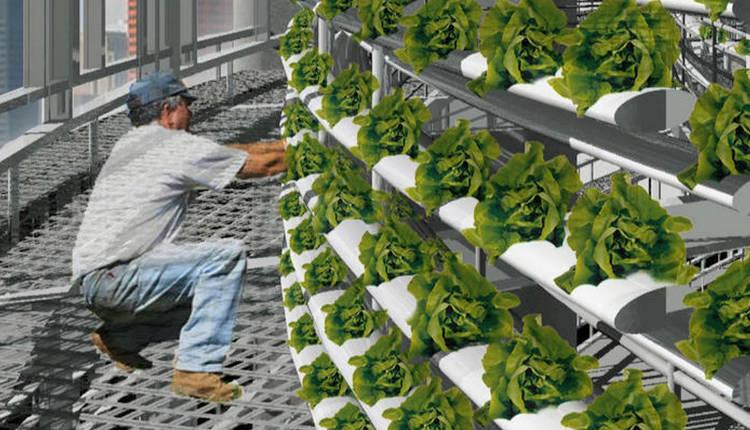 Dans la ville du futur : des fermes urbaines produisent nos salades automatiquement