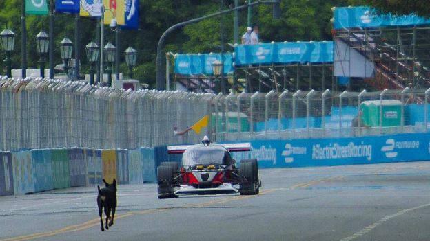 Premier Roborace : deux voitures autonomes de course, un chien, un accident (aucun blessé) !