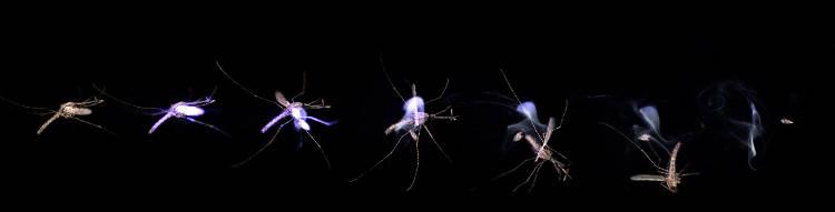 barrière anti moutique laser Une intelligence artificielle de reconnaissance d'images pour identifier l'insecte