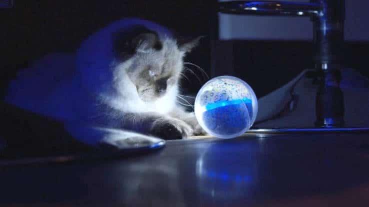Pebby un objet connecté qui suit votre animal à la trace et le filme !