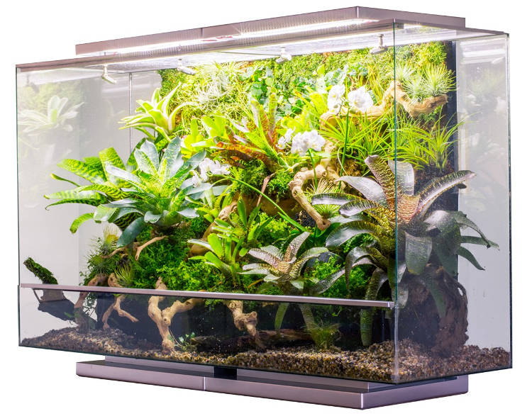 Un aquarium connect pour le bien tre de vos poissons for Jardin connecte