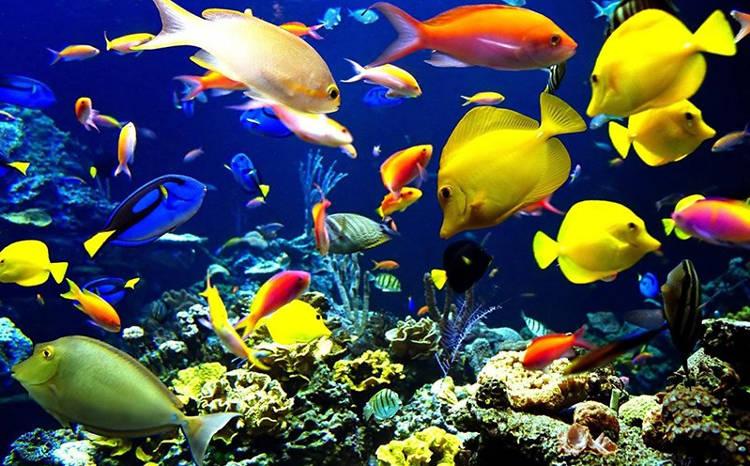 Pour le bien-être de vos poissons ou pour un écosystème complet dans votre salon, adoptez un aquarium connecté!