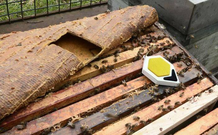 Une ruche intelligente... Et connectée !