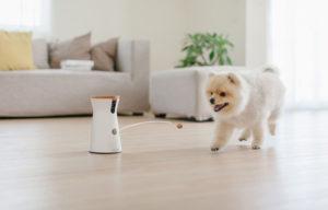 furbo l'objet connecté pour votre chien