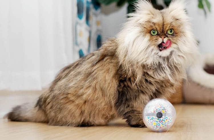 Objet connecté: une balle intelligente pour jouer à distance avec son chien cartonne sur Kickstarter