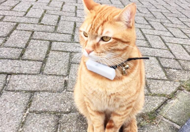 Ne risquez plus de perdre votre chat avec cet objet connecté !