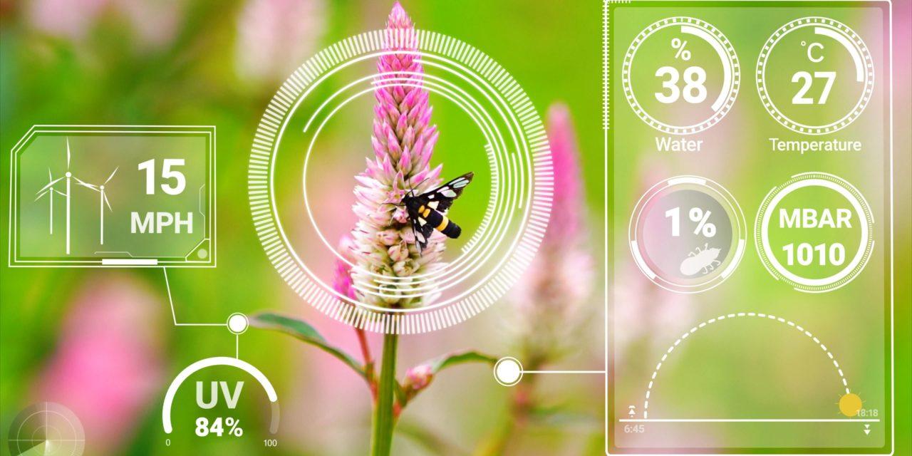 Agriculture et élevage : optimiser la gestion avec l'intelligence artificielle